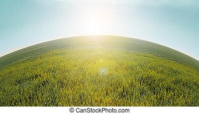 green field in the summer sun shines