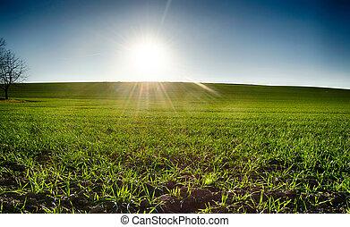 green field in the sun blue sky