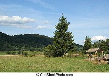 Green field - Mountain Landscape
