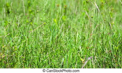 Green field of grass macro. Shot to RAW, wide dynamic range