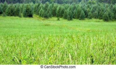 Green field of grass with heat haze. Shot to RAW, wide...