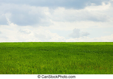green field on a background of blue sky