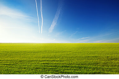 Green field on a background of the blue sky