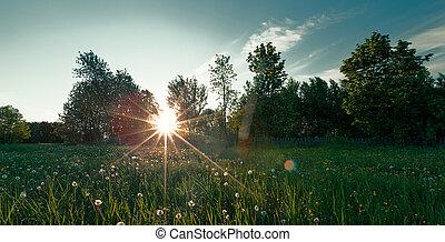 Green field on summer