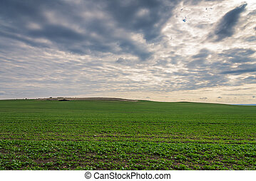 green field, panorama.