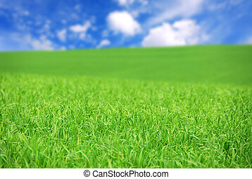 Green field - Agricultural landscape - green field of young...