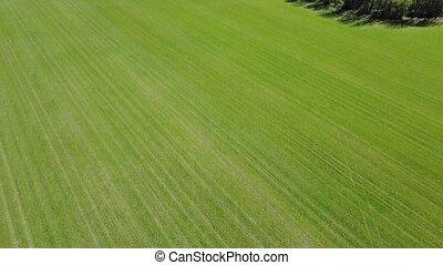 green field summer aerial shot.