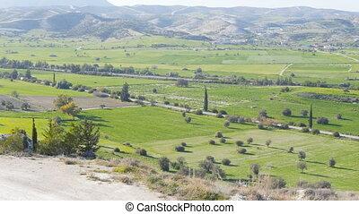 Green field. Summer landscape - Green field and trees....