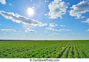 green field under a clear sky
