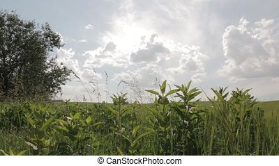 Green Field Under Sunny Skies dolly shot - Field of green...