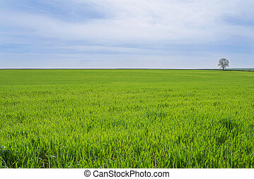 green field with a lone tree
