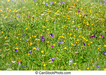 Green field with blue and yellow flowers.