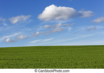 Green field with blue cloudy sky