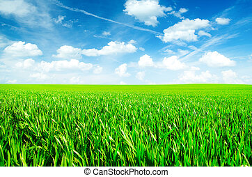 Green field with blue sky