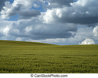Green field with dramatic sky