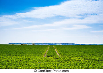 Green field with dry tire tracks