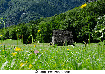 Green field with flowers and rustic house and mountain