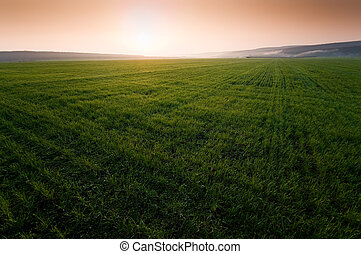 Green field with perfect grass