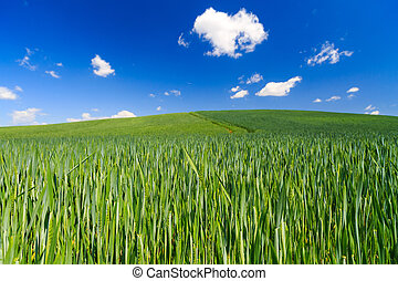 green field with the blue sky