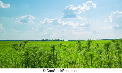 Green field with white clouds and green grass
