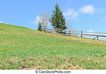 Green field , wooden fence and blue sky