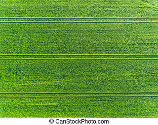 Green fields aerial view in spring - Green fields aerial...