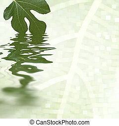 Green fig leaf reflecting in the water. White background