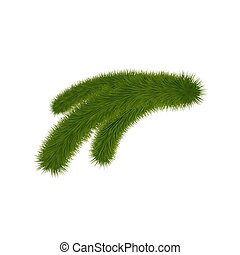 Green fir branch isolated on background. Christmas tree twig.