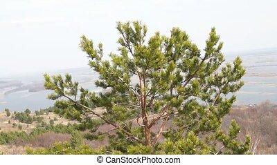 Green fir tree branch. Spruce. Woods