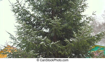 green fir tree in the snow during a snowfall