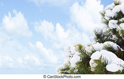 green fir tree on blue sky background