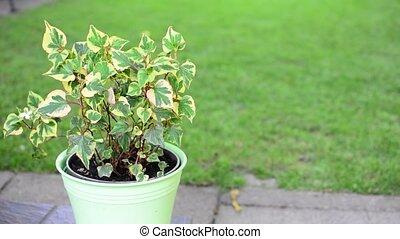 Green flower in pot