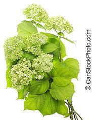 Green flowers bush  texture