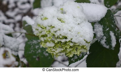 Green flowers with snow