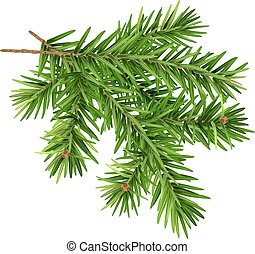 Green fluffy fir branch. Isolated on white vector ...