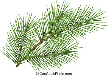 Green fluffy pine branch symbol of new year. Isolated on...