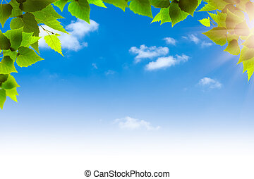 Green foliage against blue skies, natural backgrounds