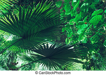 green foliage background with fan palm leaves