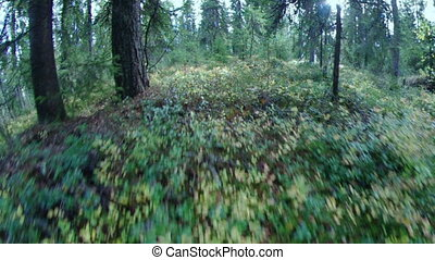green foliage in forest .taiga - green foliage in forest...