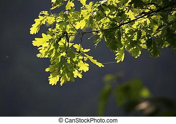 Green foliage in the sun