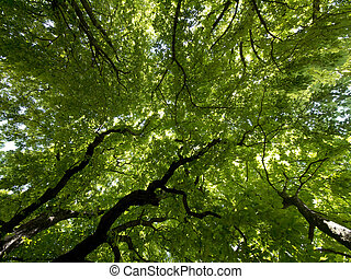 Looking up into beautiful green tree foliage