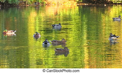 Green foliage reflected