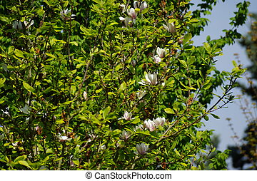 Green foliage with flowers in the sun