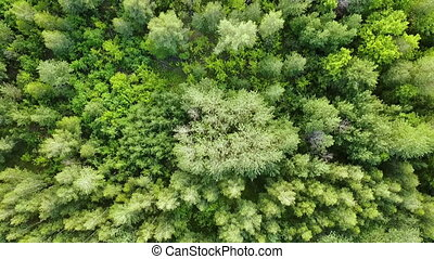 Green forest aerial top view. Mixed forest, green deciduous trees.
