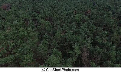 Green forest aerial top view