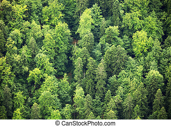 Green Forest, aerial view