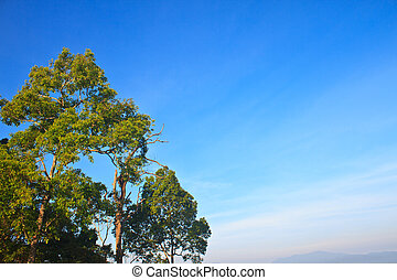 green forest and blue sky