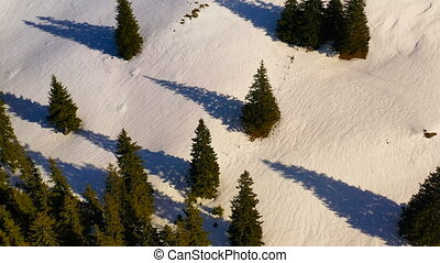 Green forest and snowy mountains, aerial winter scene in...