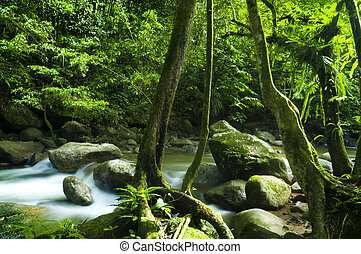 Green forest and stream