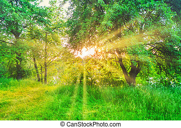 Green forest at sunset with sun beams